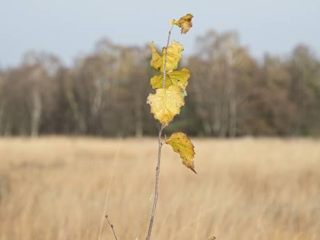Nederland heeft tienduizenden hectares extra natuur nodig