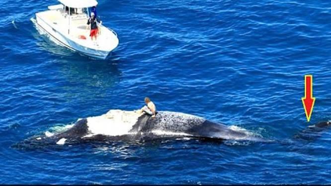 Man zit urenlang op dode walvis omringd door haaien
