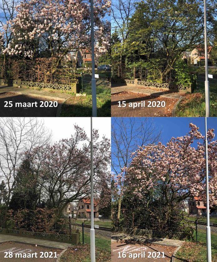 We hadden een vroege voorlente, maar door de hele koude april verliep de ontwikkeling in de natuur de afgelopen weken tergend traag. De planten komen inmiddels zeer laat in bloei. De huidige timing is vergelijkbaar met het gemiddelde van vijftig jaar geleden en dat zijn we niet meer gewend.