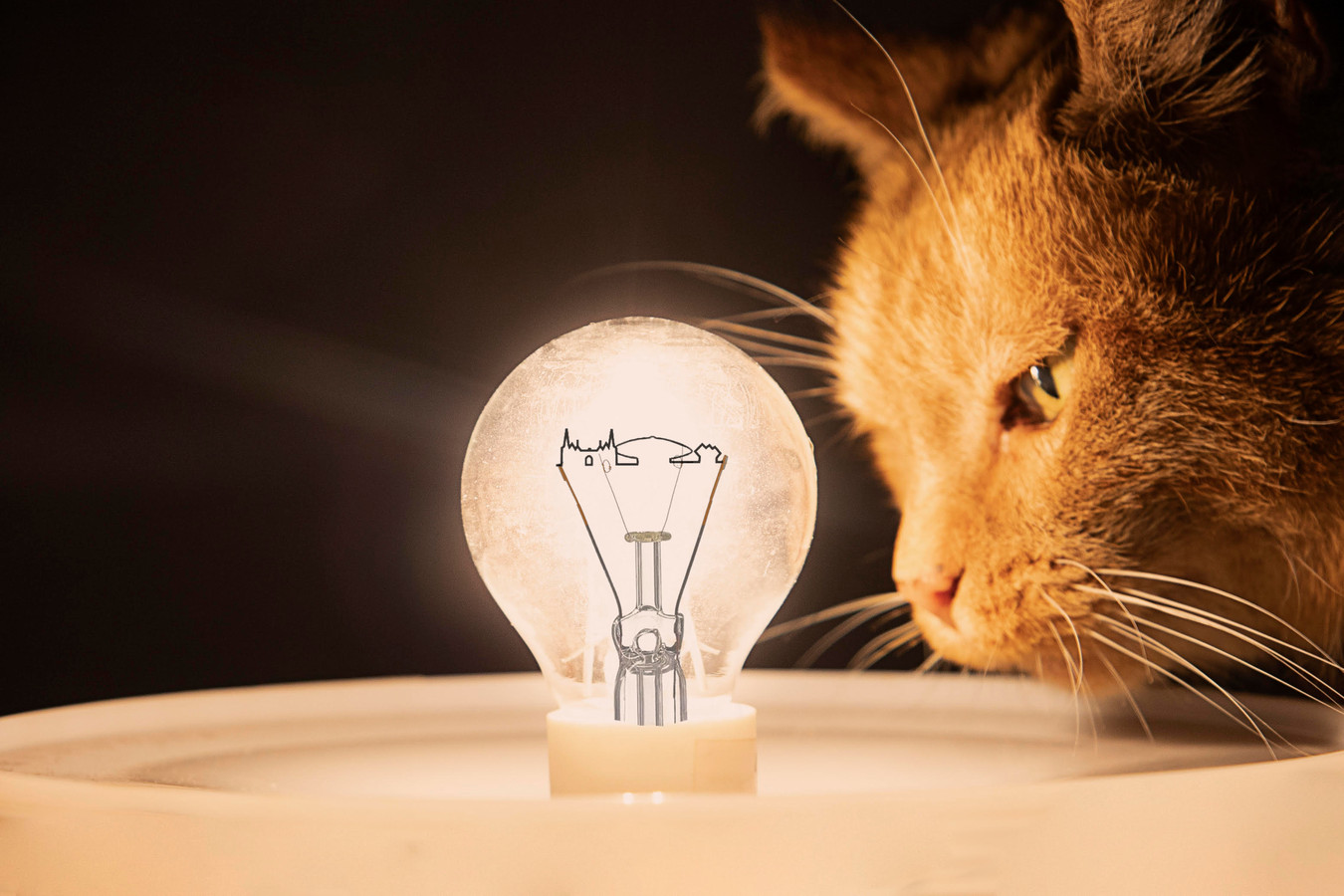 Lampegatters en kattenmeppers door middel van kennis gekoppeld.