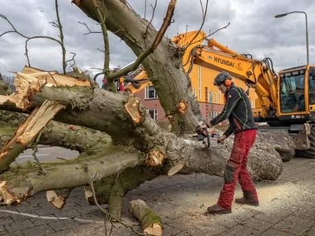 Nieuw beleid voor bomenoverlast: 'Het verzandt vaak in een welles-nietes-discussie'