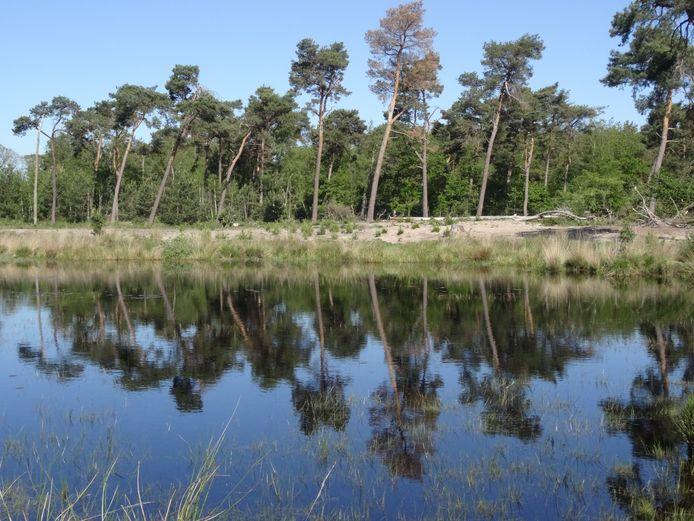 Een beeld van het Vresselse Bos waar sparren worden gerooid, maar waar het onbekend is wat ervoor in de plaats komt en waar ook eiken het zullen moeten ontgelden. Foto Aad van der Spek