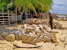 Filipijnse kustwacht stuit op reuzenschelpen ter waarde van 25 miljoen dollar