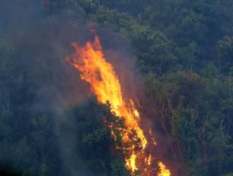 Italiaanse regio Molise vraagt noodtoestand af te kondigen vanwege verwoestende bosbranden