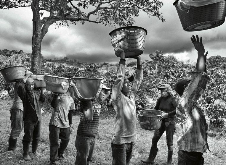 null Beeld © Sebastião SALGADO / Amazonas