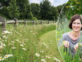 Bloemenweides enorm populair: onze tuinexperte legt uit hoe je er zelf een maakt in je tuin