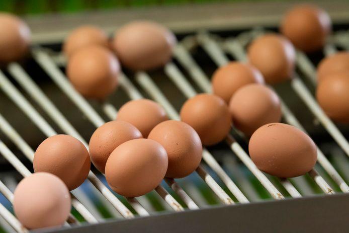 Ook in uit Polen geïmporteerde eieren zou een te hoog gehalte fipronil zijn gevonden