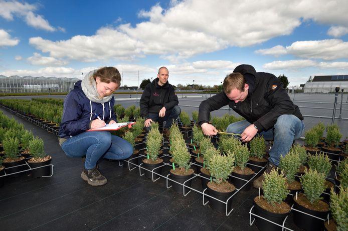 Wilco Dorresteijn geeft aanwijzingen aan de stagiaires Tamara en Joeri, die de coniferen op de speciale compost opmeten.