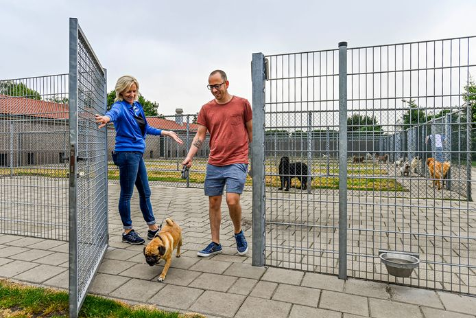 Dierenpension Hoevekestijn in Wouwse Plantage zit vanaf eind juli tot en met eind september al vol.