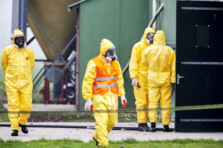 Leden van een ruimploeg bij een pluimveebedrijf in Zoeterwoude waar vogelgriep is vastgesteld. Beeld anp