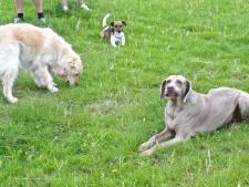 Hondenloopweide aan Ryckeveldebos meteen gesloten nadat dier ernstig ziek is geworden