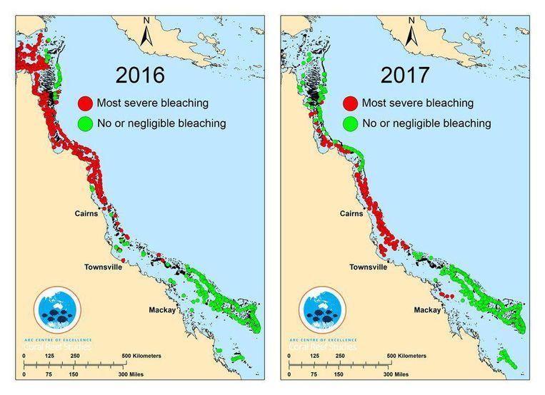Bepaalde delen van het koraalrif werden ook in 2016 al aangetast. Beeld ARC