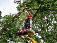 Veere brengt beschermde bomen in kaart