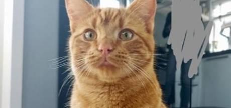 Kat beschoten met luchtdrukwapen en overleeft het niet: 'Dit moet stoppen!'