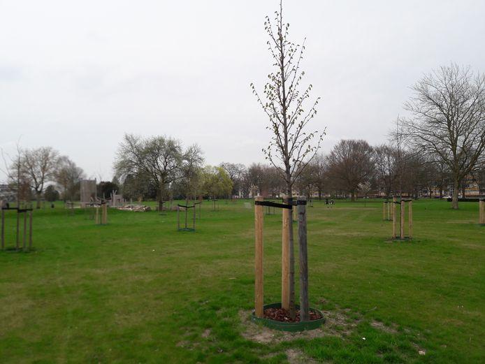 Door leerlingen van Helicon geplante bomen in het Apeldoornse Zuiderpark.