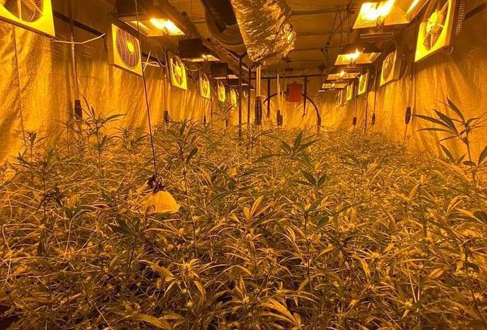 In Deelen werd een ondergrondse wietplantage ontdekt met 1200 planten.