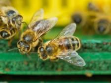 Waarom bijen voor mensen 'van levensbelang' zijn: 'Bijna alles wat groeit in de natuur is gebonden aan de bij'