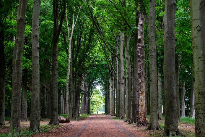 De bomen in de dreef in Boechout moeten dan toch niet verdwijnen.