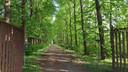 De bomenlaan richting Haarendael ligt er prachtig bij.