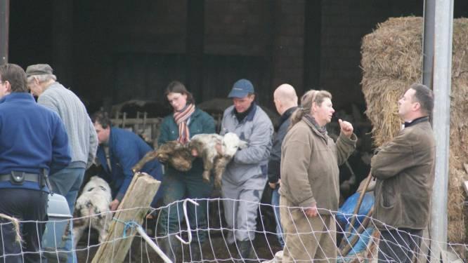 Pepingse boeren ook in beroep veroordeeld voor dierenmishandeling