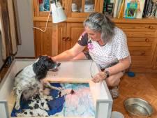 Heinkenszandse hond Hetty bevalt van tien puppies: 'Ze bleven maar komen'