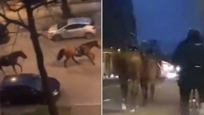 Straffe beelden na interventie in Ter Kamerenbos: politiepaarden galopperen zonder ruiter terug naar kazerne
