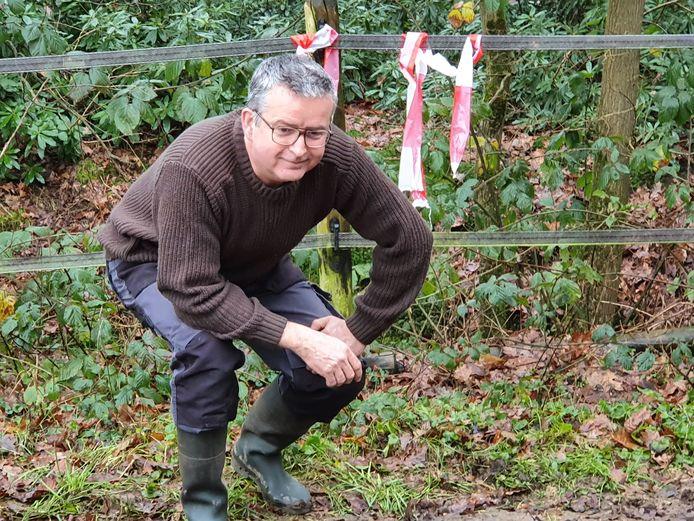 In de paardenbak aan de Roovertsedijk in Esbeek heeft Paul Scheepens sporen van een wolf gevonden.