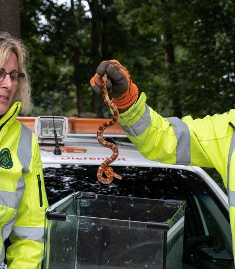 Bij Brigitte (45) uit Nijkerk glibberde er opeens een slang over de vloer: 'Dacht dat het een grapje was'