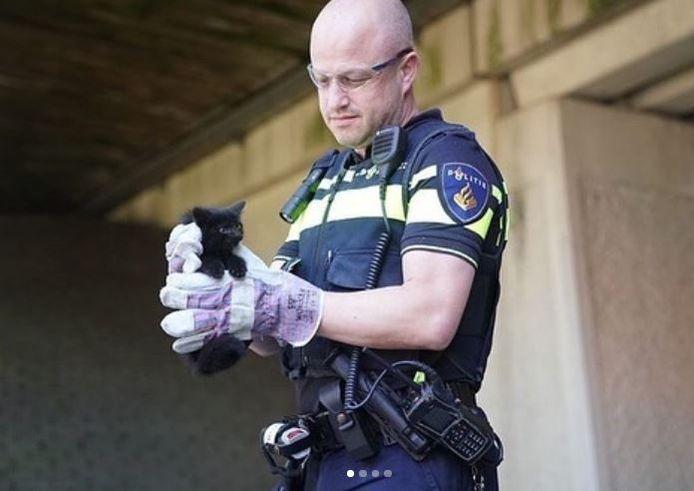 Politie en brandweer redden kitten die vastzat onder ene viaduct van de A2 in Maarheeze.