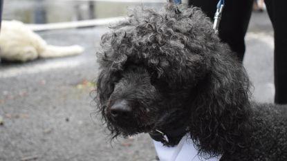 Hondenlosloopweide 'den Tuur' opent op woensdag 17 april