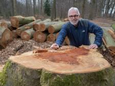 Bomenexpert beoordeelt grootschalige kap langs Molenweg in Olst: 'Als je niet weet waarom het gebeurt, ga je steigeren'