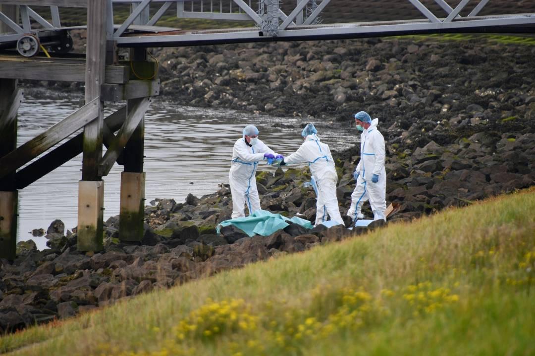 De dode man die bij de Oesterdam werd gevonden, blijkt een 50-jarige man uit Venezuela te zijn.