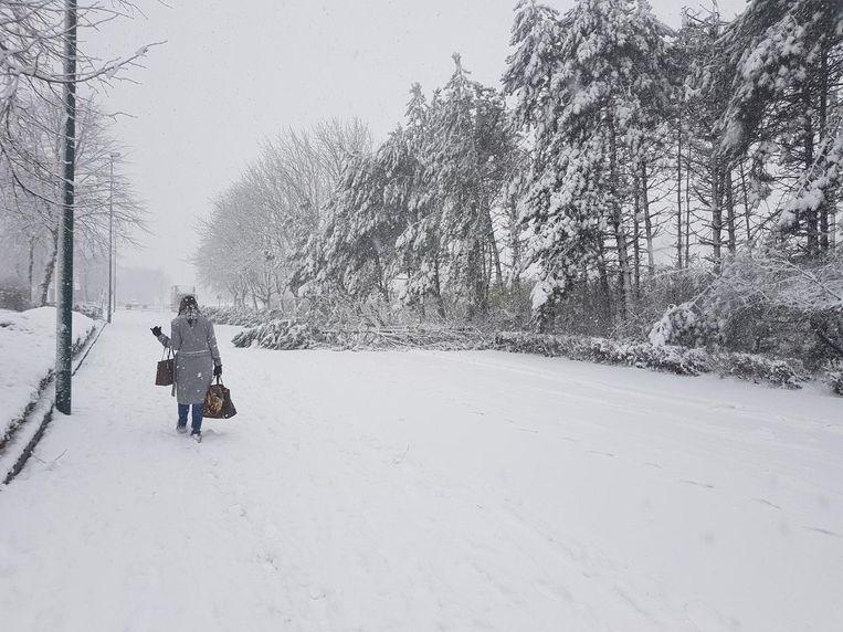 Op de Europalaan in Aalter begaven bomen het onder het gewicht van de sneeuw.