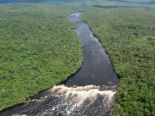 441 nouvelles espèces découvertes en Amazonie depuis 2010