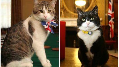 Ken jij de officiële muizenvangers van de Britse premier al? (Ze blijven voor ophef zorgen)