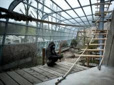 Orang-oetans en gorilla's Ouwehands gaan straks los op Haagse brandweerslangen