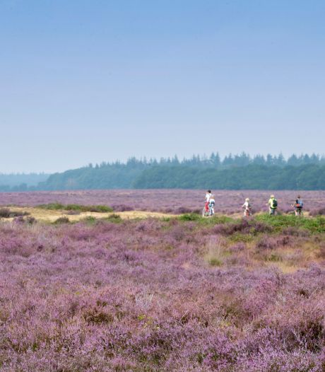 Gelderland pakt boeren die veel stikstof uitstoten niet actief aan: 'Lukraak bedrijven opkopen levert weinig op'
