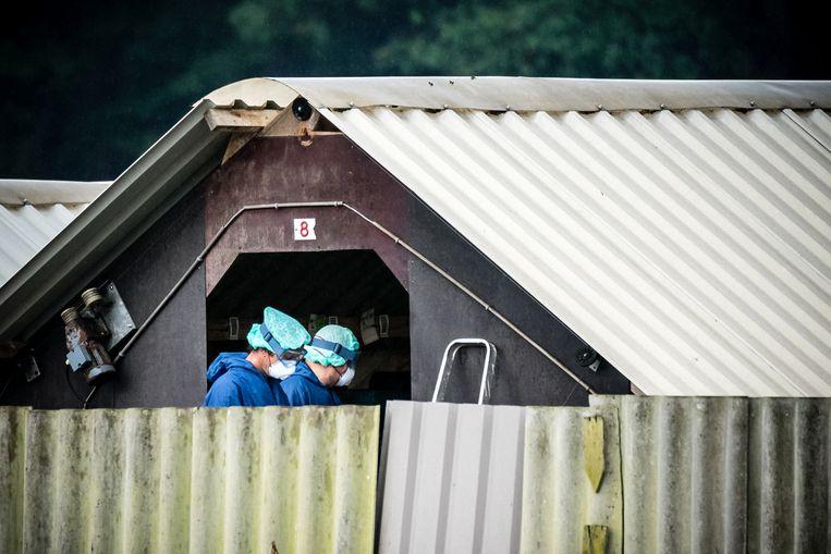 Een nertsenfokkerij in Deurne werd al geruimd. Beeld ANP