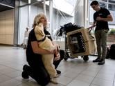 Speurhonden in Turkije aangekomen om te zoeken naar Joey