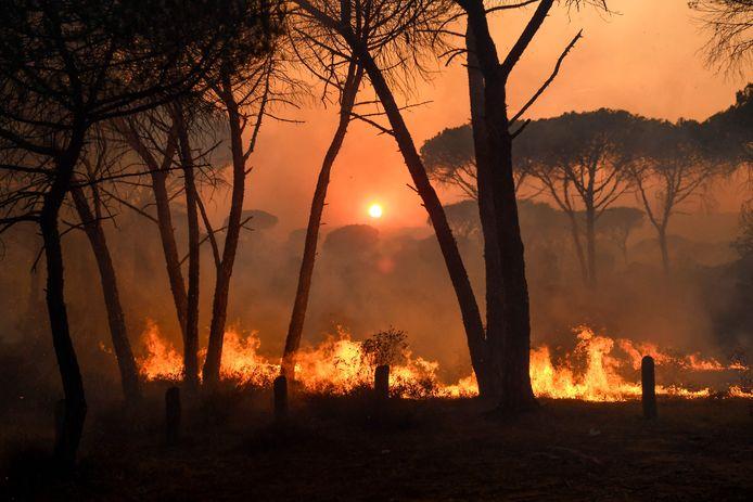 Grande incendio boschivo vicino a Gonfaron a Var