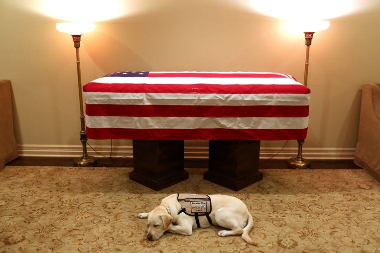 Labrador Sully, een hond getraind om veteranen en mensen met een handicap te helpen, ligt te dommelen bij de kist van de vrijdag overleden George H.W. Bush. Beeld Vrijgegeven door de woordvoerder van George H.W. Bush