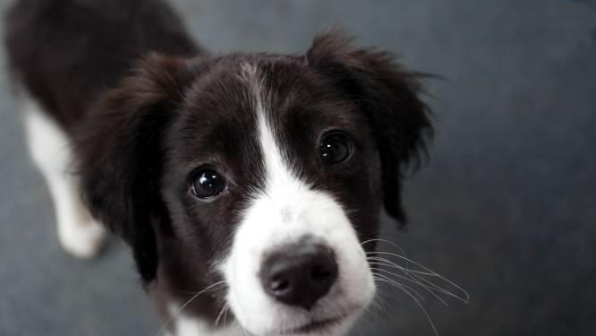 Annemiek ontsnapt op nippertje aan brutale hondendieven: 'Ik dacht maar één ding: wegwezen hier!'