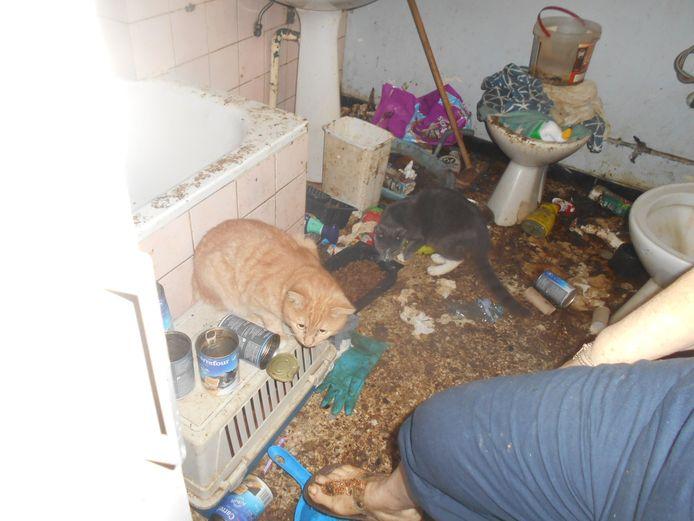 Ce chat a été récupéré dans des conditions épouvantables par la SPA de Charleroi