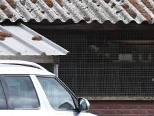 Opnieuw besmetting met corona bij nertsen in Landhorst: vijfde geval, dieren vandaag geruimd