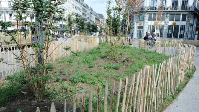 VGC lanceert projectoproep voor duurzame en leefbare stadsinitiatieven