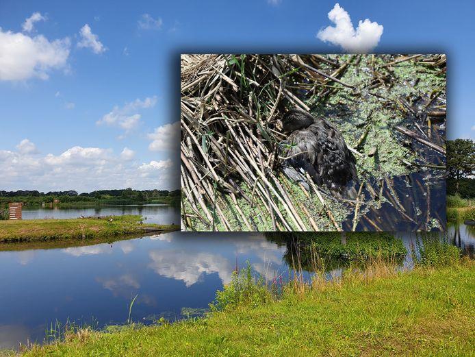 In het natuurgebied kristalbad tussen Enschede en Hengelo zijn tientallen dode eenden aangetroffen.