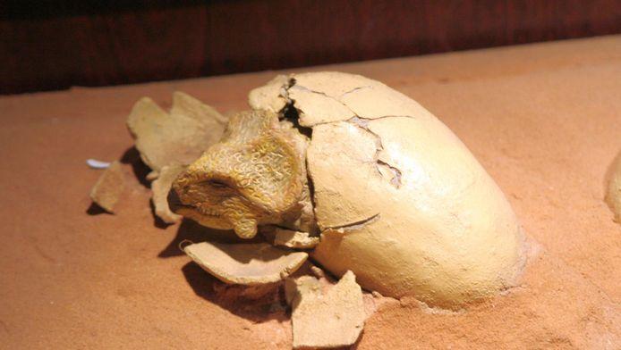 Een beeld van een protoceratops uit een ei.
