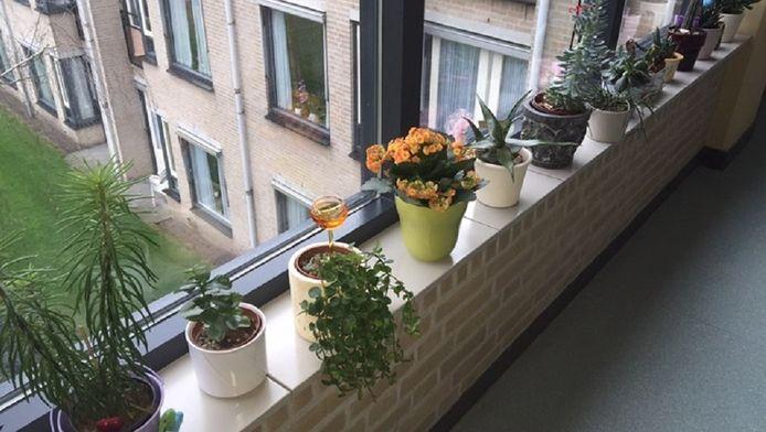 De betreffende plantjes in de vensterbank