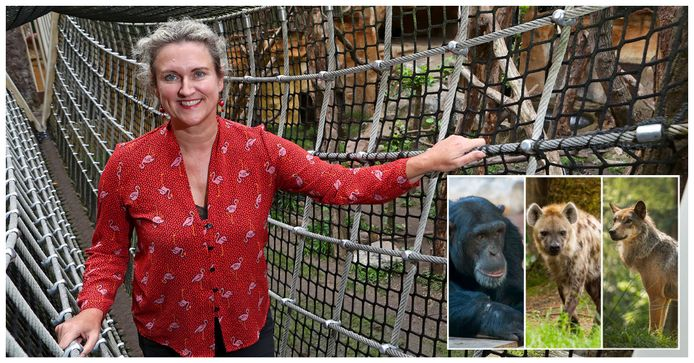 Directeur Astrid Wassenaar had een druk jaar. Er ontsnapten maar liefst vijf dieren uit in verblijf in Dierenpark Amersfoort.
