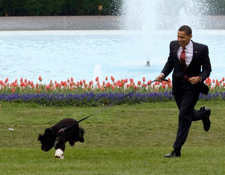 President Barack Obama rent met zijn hond over het grasveld van het Witte Huis.   Beeld Reuters